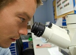 Scientist looking down microscope